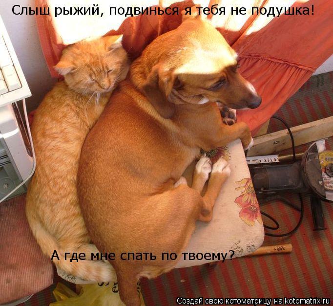 Котоматрица: Слыш рыжий, подвинься я тебя не подушка! А где мне спать по твоему?
