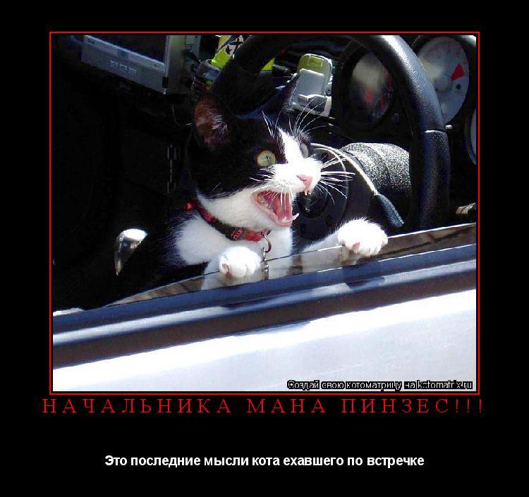 Котоматрица: Начальника мана ПИНЗЕС!!! Это последние мысли кота ехавшего по встречке