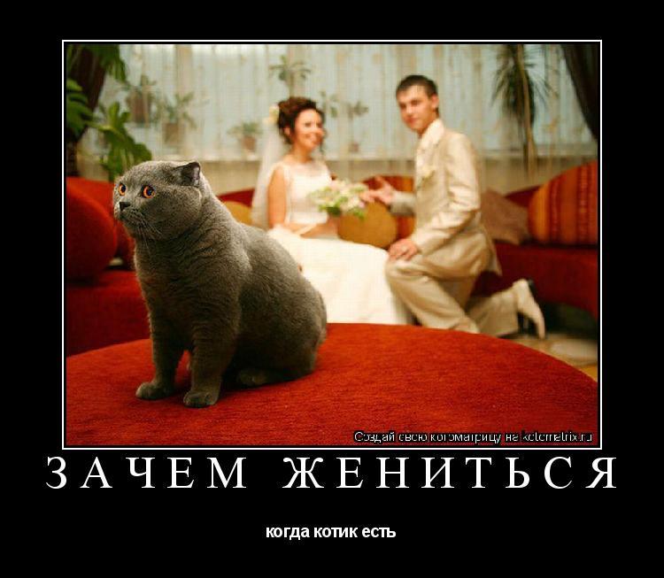 Котоматрица: зачем жениться когда котик есть