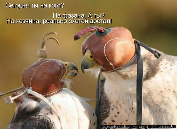 Котоматрица: Сегодня ты на кого? На фазана, А ты? На хозяина, реально охотой достал!