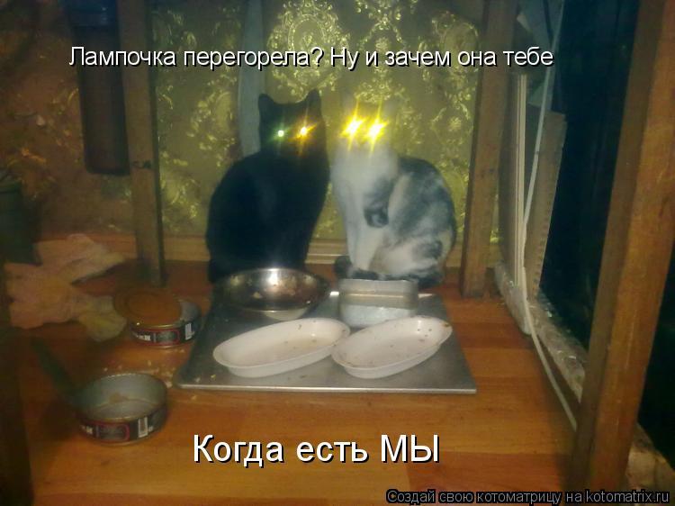 Котоматрица: Лампочка перегорела? Ну и зачем она тебе Когда есть МЫ
