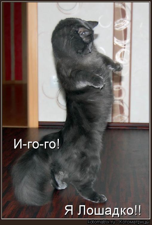 Котоматрица: И-го-го! Я Лошадко!!