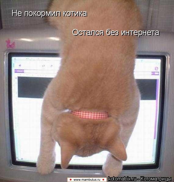 Котоматрица: Не покормил котика Остался без интернета