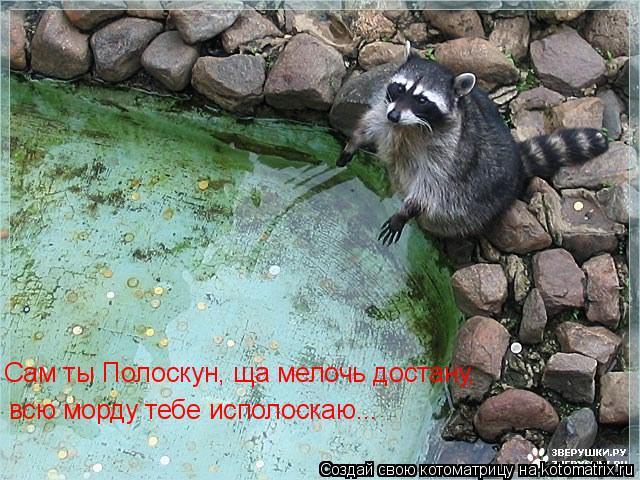 Котоматрица: Сам ты Полоскун, ща мелочь достану, всю морду тебе исполоскаю...