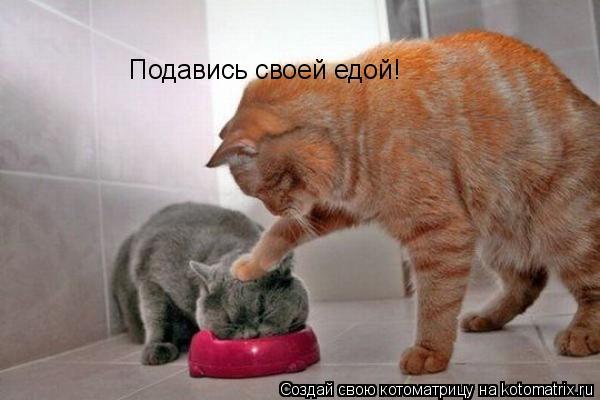 Котоматрица: Подавись своей едой!