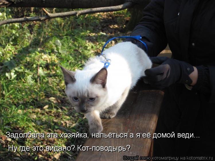 Котоматрица: Задолбала эта хозяйка, напьёться а я её домой веди... Ну где это видано? Кот-поводырь?