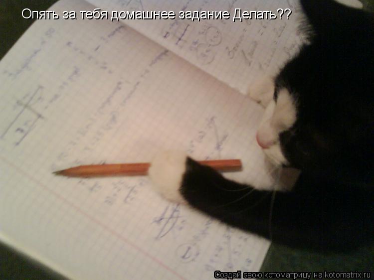 Котоматрица: Опять за тебя домашнее задание Делать??