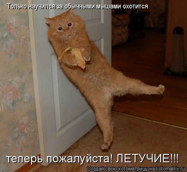 Котоматрица: Только научился за обычными мышами охотится теперь пожалуйста! ЛЕТУЧИЕ!!!
