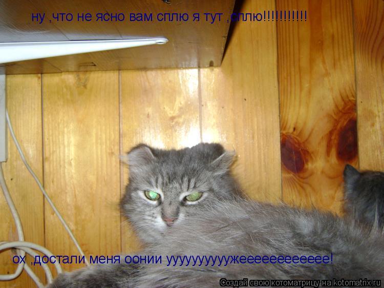 Котоматрица: ну ,что не ясно вам сплю я тут ,сплю!!!!!!!!!!! ох ,достали меня оонии уууууууууужееееееееееее!