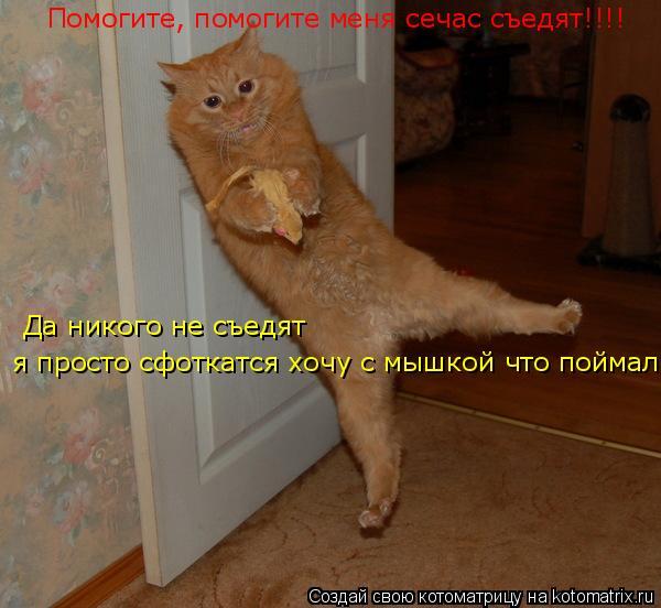 Котоматрица: Помогите, помогите меня сечас съедят!!!!  Да никого не съедят Да никого не съедят я просто сфоткатся хочу с мышкой что поймал