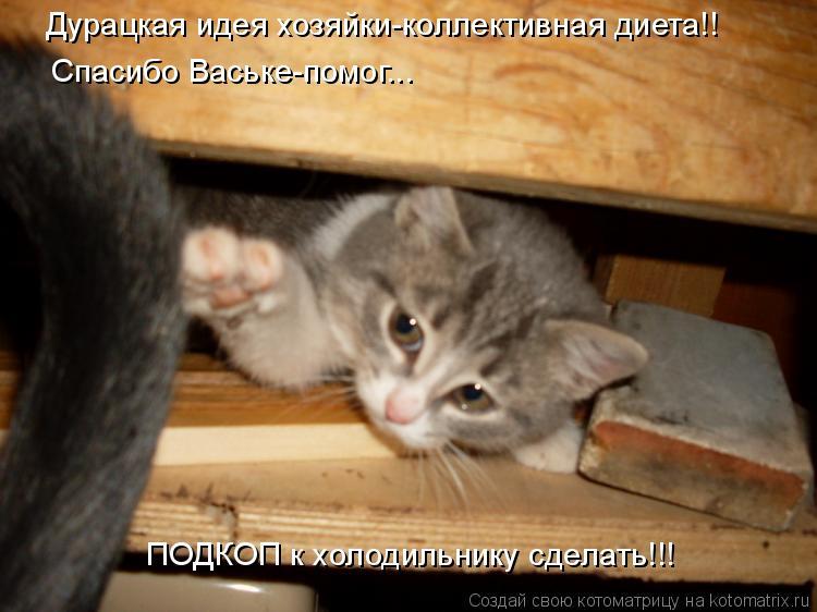 Котоматрица: Дурацкая идея хозяйки-коллективная диета!! Спасибо Ваське-помог... ПОДКОП к холодильнику сделать!!!