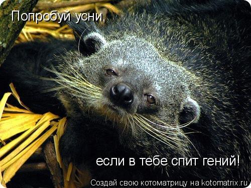 Котоматрица: Попробуй усни,  если в тебе спит гений!