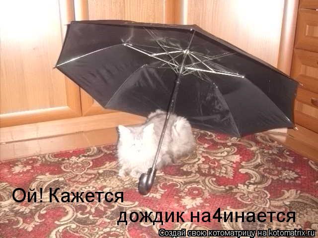 Котоматрица: Ой! Кажется дождик на4инается =*