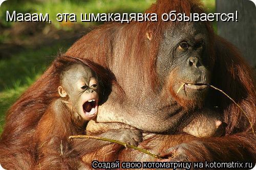 Котоматрица: Мааам, эта шмакадявка обзывается!