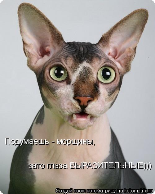Котоматрица: Подумаешь - морщины,  зато глаза ВЫРАЗИТЕЛЬНЫЕ)))