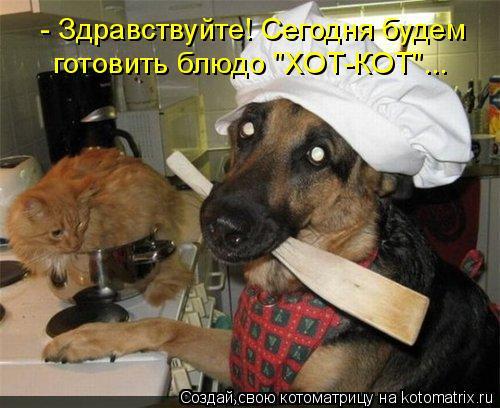 """Котоматрица: - Здравствуйте! Сегодня будем готовить блюдо """"ХОТ-КОТ""""..."""