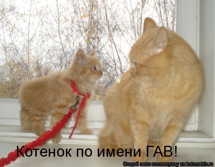 Котоматрица: Котенок по имени ГАВ!