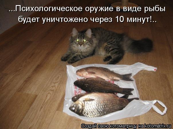 Котоматрица: ...Психологическое оружие в виде рыбы будет уничтожено через 10 минут!..