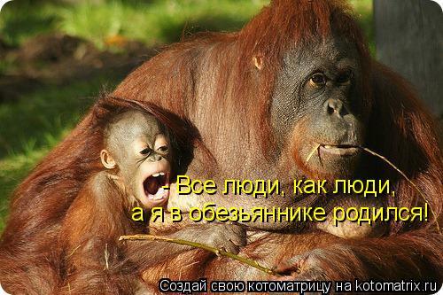Котоматрица: - Все люди, как люди, а я в обезьяннике родился!