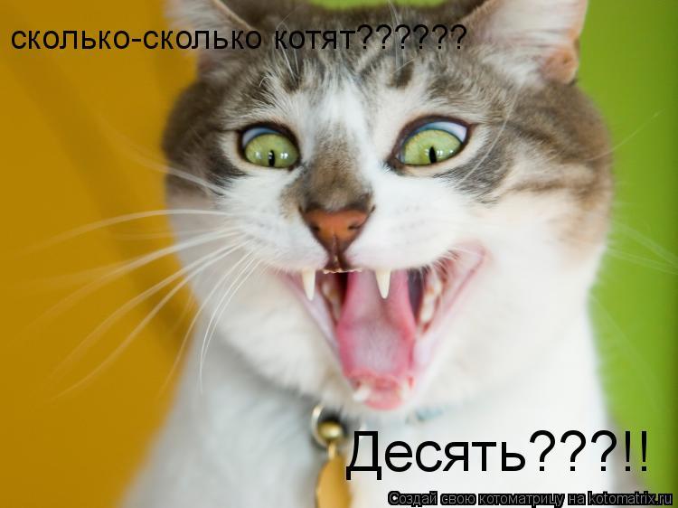 Котоматрица: сколько-сколько котят?????? Десять???!!