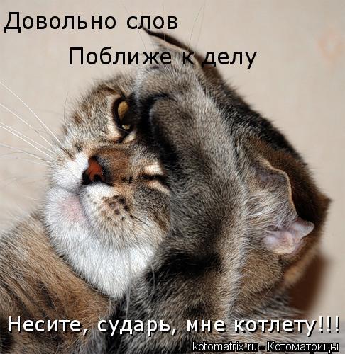 Котоматрица: Довольно слов Поближе к делу Несите, сударь, мне котлету!!!