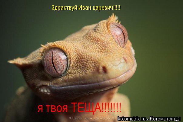 Котоматрица: Здраствуй Иван царевич!!!!! я твоя ТЕЩА!!!!!!!