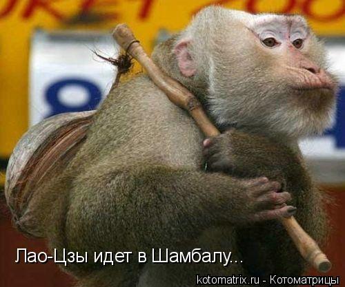 Котоматрица: Лао-Цзы идет в Шамбалу...