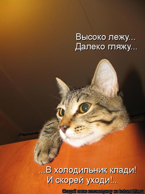 Котоматрица: Высоко лежу... Далеко гляжу... ...В холодильник клади! И скорей уходи!..