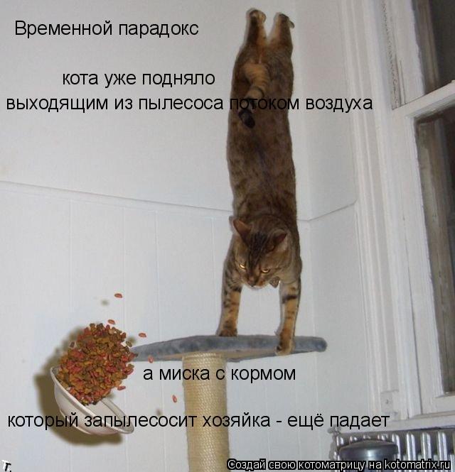Котоматрица: Временной парадокс кота уже подняло а миска с кормом который запылесосит хозяйка - ещё падает выходящим из пылесоса потоком воздуха
