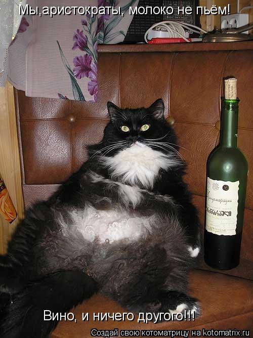 Котоматрица: Мы,аристократы, молоко не пьём! Вино, и ничего другого!!!