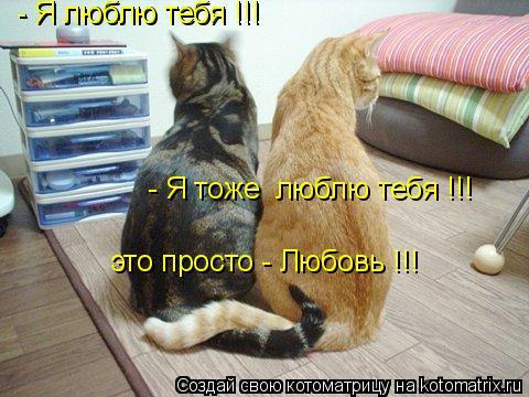 Котоматрица: - Я люблю тебя !!! - Я тоже  люблю тебя !!! - Я люблю тебя !!! это просто - Любовь !!!