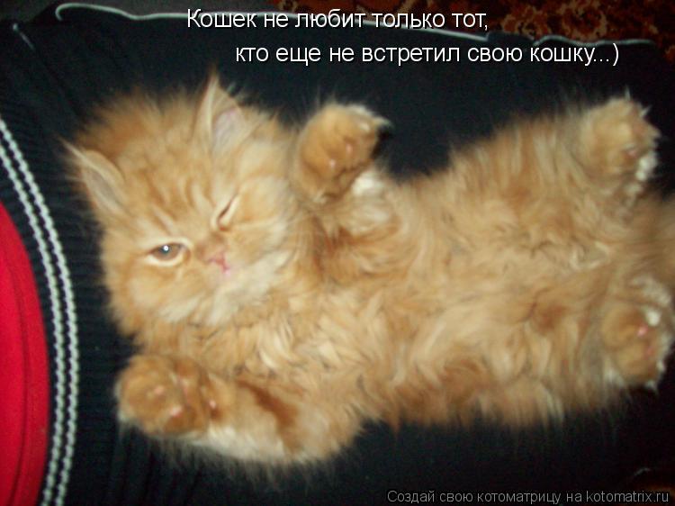 Котоматрица: Кошек не любит только тот,  кто еще не встретил свою кошку...)