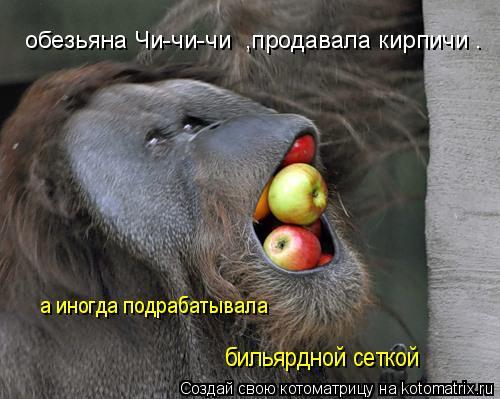 Котоматрица: обезьяна Чи-чи-чи  ,продавала кирпичи . а иногда подрабатывала  бильярдной сеткой