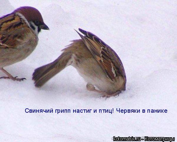 Котоматрица: Свинячий грипп настиг и птиц! Червяки в панике Свинячий грипп настиг и птиц! Червяки в панике
