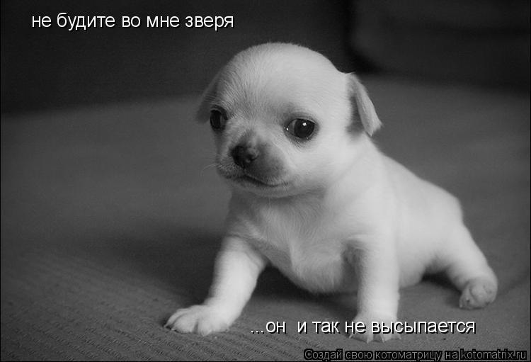 Котоматрица: не будите во мне зверя ...он  и так не высыпается