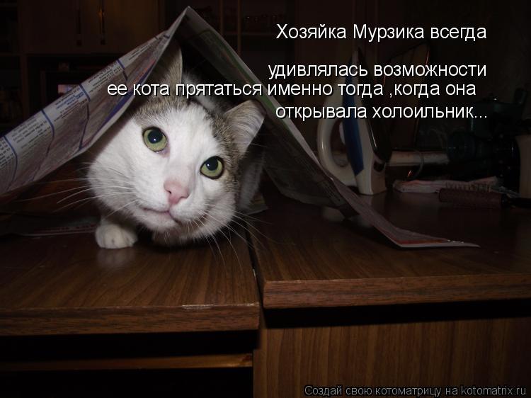 Котоматрица: Хозяйка Мурзика всегда удивлялась возможности ее кота прятаться именно тогда ,когда она открывала холоильник...