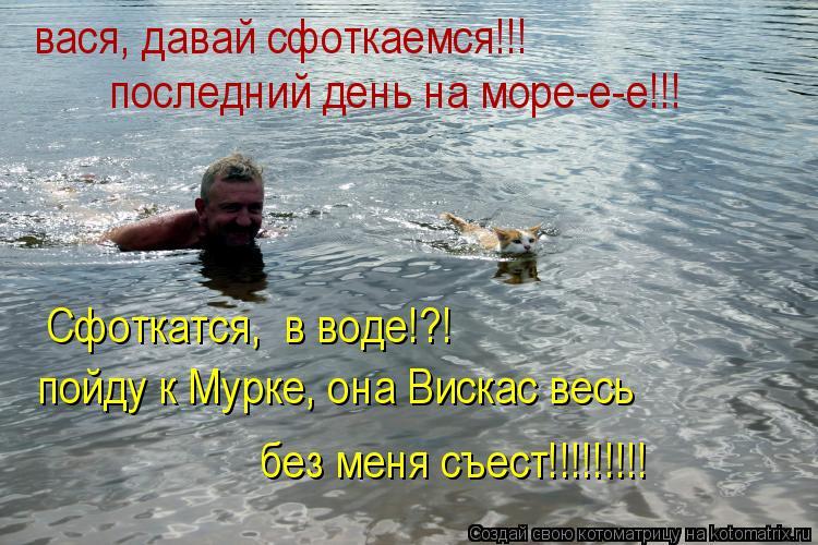 Котоматрица: вася, давай сфоткаемся!!! последний день на море-е-е!!! пойду к Мурке, она Вискас весь без меня съест!!!!!!!!! Сфоткатся,  в воде!?!