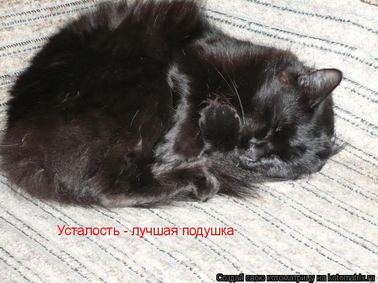 Котоматрица: Усталость - лучшая подушка