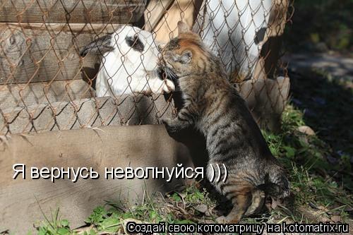 Котоматрица: Я вернусь неволнуйся )))