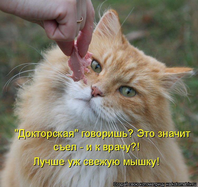 """Котоматрица: """"Докторская"""" говоришь? Это значит  съел - и к врачу?! Лучше уж свежую мышку!"""