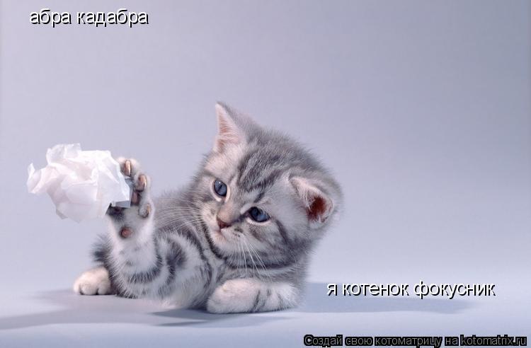 Котоматрица: абра кадабра я котенок фокусник