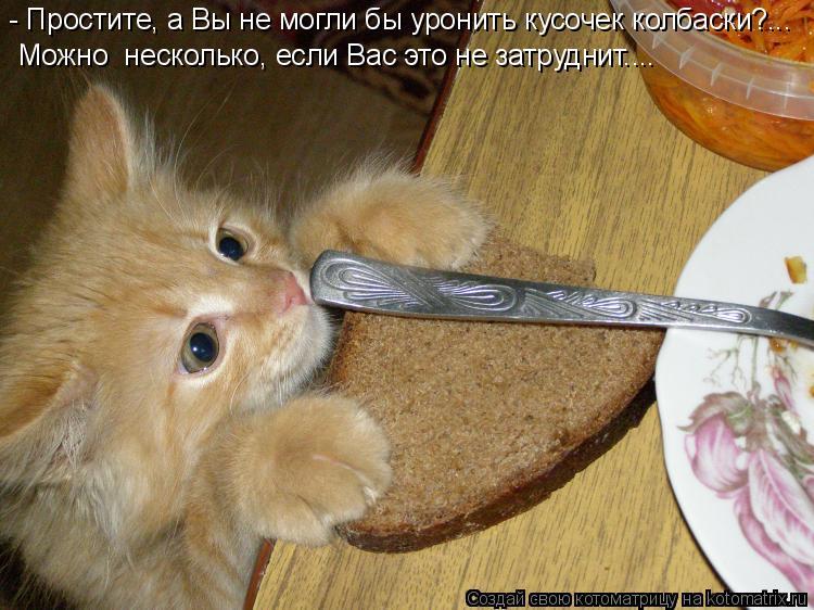 Котоматрица: - Простите, а Вы не могли бы уронить кусочек колбаски?... Можно  несколько, если Вас это не затруднит....