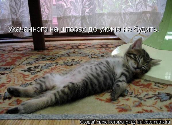 Котоматрица: Укачанного на шторах до ужина не будить!