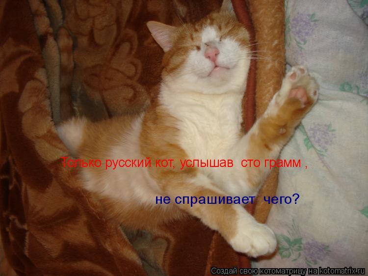 Котоматрица: Только русский кот, услышав «сто грамм»,  не спрашивает «чего?»