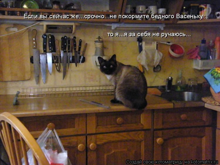Котоматрица: Если вы сейчас же...срочно...не покормите бедного Васеньку... то я...я за себя не ручаюсь...