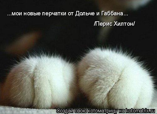 Котоматрица: ...мои новые перчатки от Дольче и Габбана...  /Перис Хилтон/