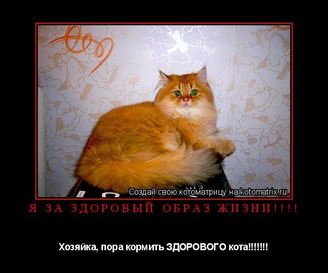 Котоматрица: Я за здоровый образ жизни!!!! Хозяйка, пора кормить ЗДОРОВОГО кота!!!!!!!