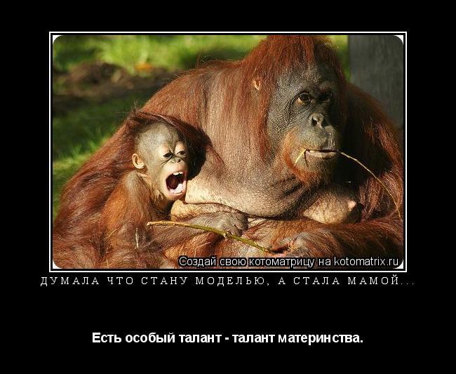 Котоматрица: Думала что стану моделью, а стала мамой... Есть особый талант - талант материнства.