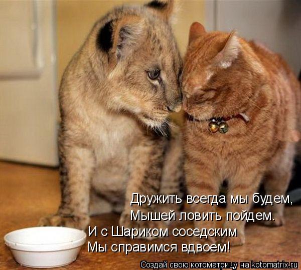 Котоматрица: Дружить всегда мы будем, Мышей ловить пойдем. И с Шариком соседским Мы справимся вдвоем!