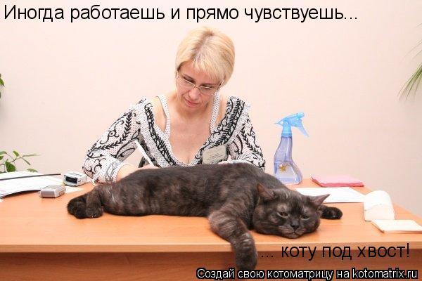 Иногда работаешь и прямо чувствуешь... ... коту под хвост!